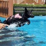 Havoc 4 months old dock diving lesson 1